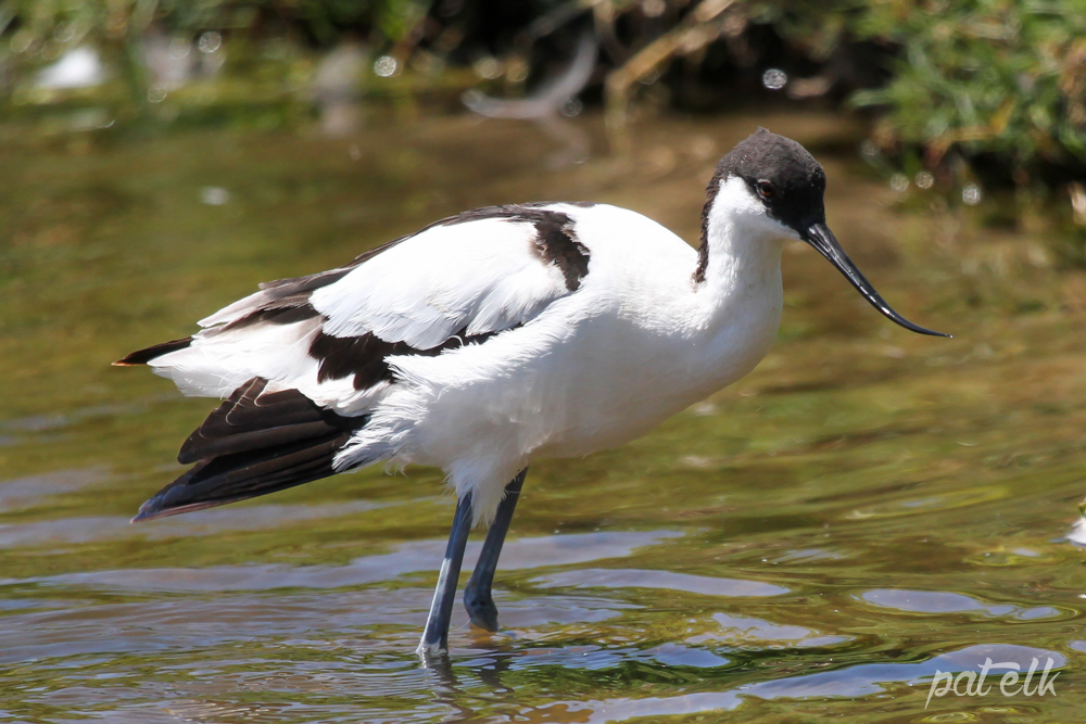 Avocet stand