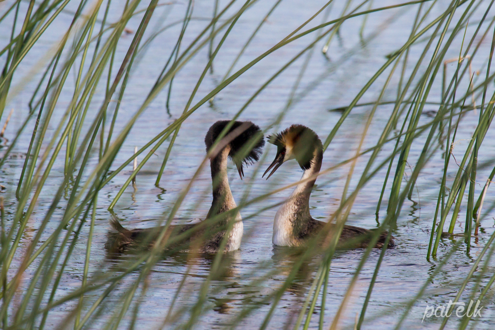 Love in the reeds