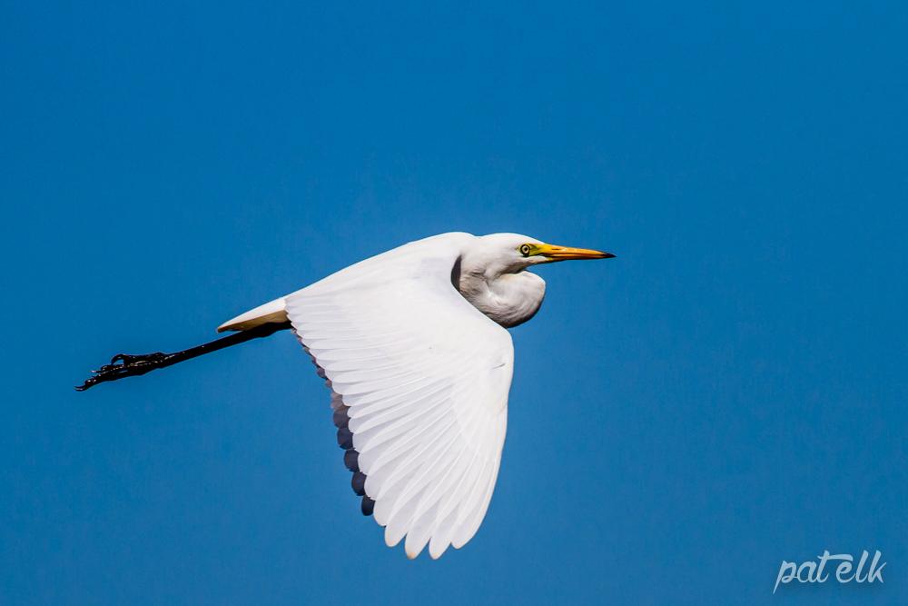 Yell bill Heron