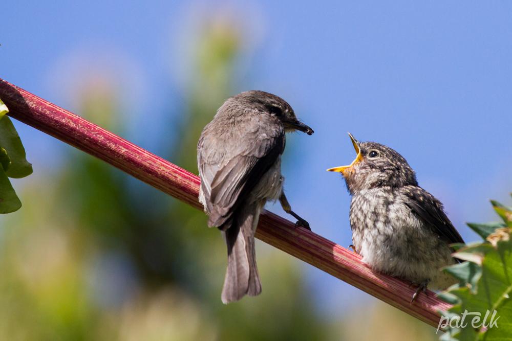 d flycat feed 2