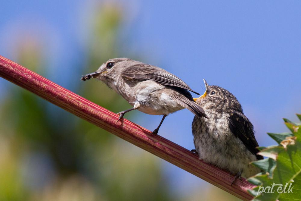 d flycat feed 3