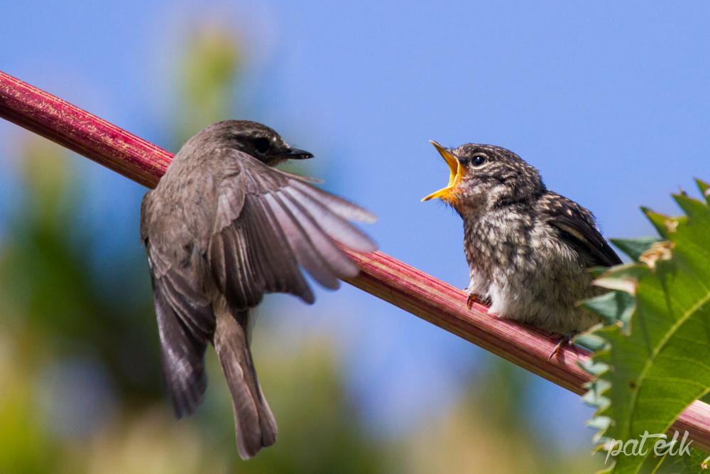 d flycat feed 5