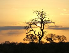 Sunsets of Kruger National Park